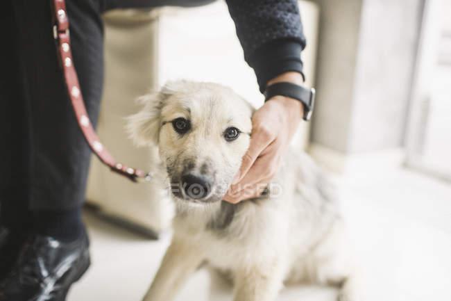 Mann tätschelt Hund in Wohnung — Stockfoto
