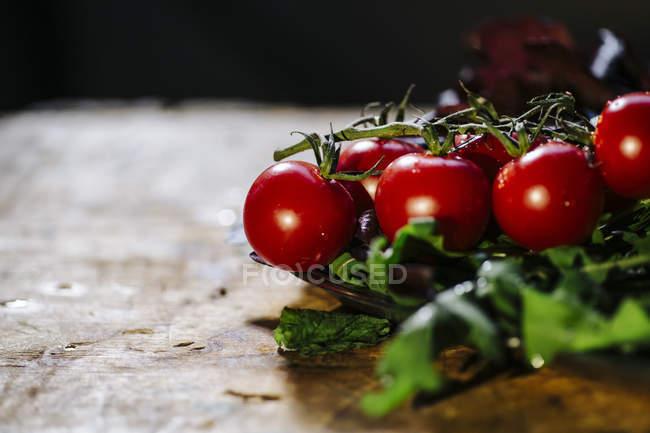Cherry tomatoes and fresh herbs — Stock Photo