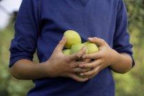 Menino com a mão cheia de maçãs — Fotografia de Stock