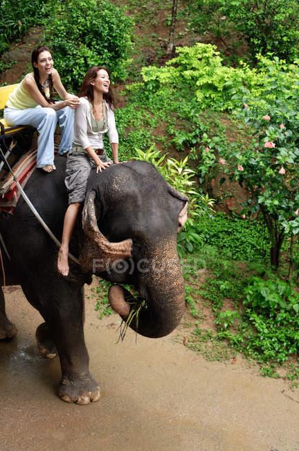 Жінки їзда на слона — стокове фото