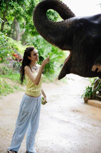 Donna elefante di alimentazione — Foto stock