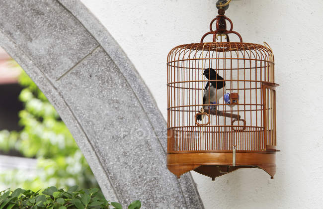 Wicker bird cage — Stock Photo