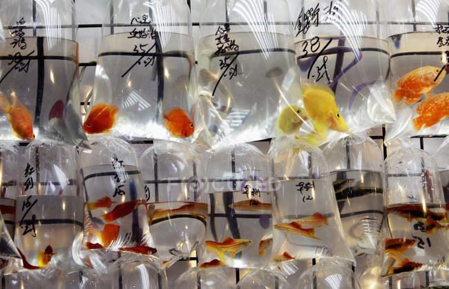 Pesci colorati in sacchetti di plastica — Foto stock