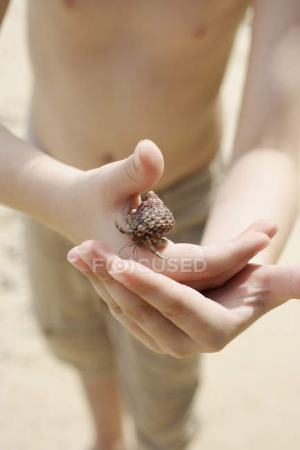 Hermit crab in boys hands — Stock Photo