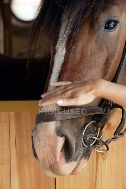 Hand petting nose of horse — Stock Photo