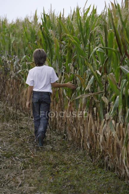 Menino andando ao longo do campo de milho — Fotografia de Stock