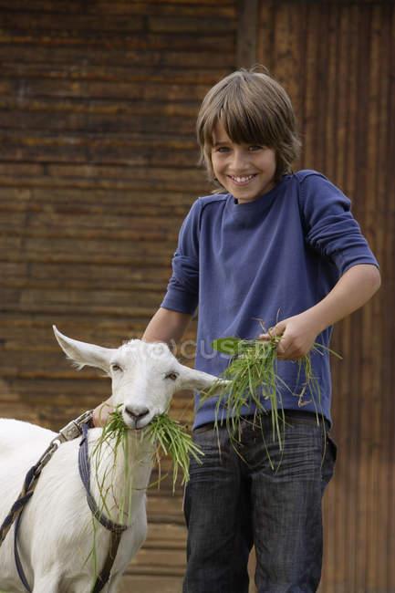 Хлопчик стоїть і годування Коза — стокове фото