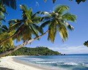 Пальмы на пляже Anse Takamaka — стоковое фото