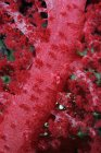 Soft coral in Red Sea — Stock Photo