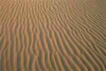 Sand ripples, Western Desert — Stock Photo