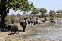 Група слонів після грязьову ванну — стокове фото