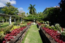 Observing view of Nevis Botanical Garden — Stock Photo