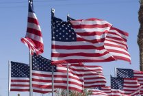 American flags at Patton Museum — Stock Photo