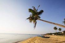 Пальмы на побережье в дневное время — стоковое фото