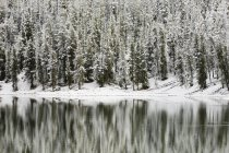 Río de Yellowstone en el invierno - foto de stock