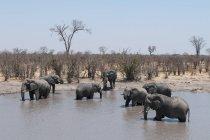 Орда африканські слони у воді — стокове фото