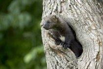 Baby-Fisher im Baum — Stockfoto