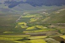 Observando a vista aérea de campos de lentilhas — Fotografia de Stock