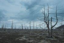 Мертве дерево лісу на вулкан Tolbachik — стокове фото