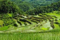Ansicht von Batad Reisterrassen beobachten — Stockfoto