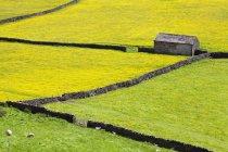 Сарай і сухий кам'яних стін — стокове фото