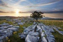 Arbre solitaire et trottoir de calcaire au coucher du soleil — Photo de stock