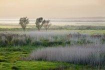 Aldeburgh Marshes à coucher de soleil — Photo de stock