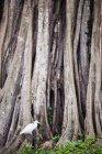 Grande aigrette sous les arbres — Photo de stock