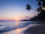 Palm tree at sunset on beach — Stock Photo