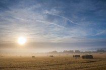 Туманный рассвет над полем — стоковое фото