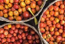 Vista superiore di pomodori in cestini — Foto stock