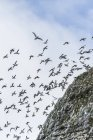 Steep cliffs filled with nesting birds — Stock Photo