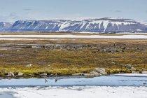 Пара Лонг – білохвостих качок у воді — стокове фото