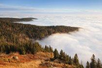 Nevoeiro de manhã cedo ao nascer do sol — Fotografia de Stock