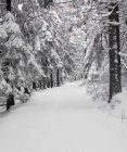 Path through a forest in winter — Stock Photo