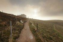Belchen montanha, floresta negra — Fotografia de Stock