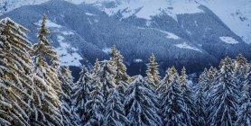 Arbres recouverts de neige en bois — Photo de stock