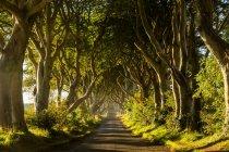 Tunnel di alberi siepi buio — Foto stock