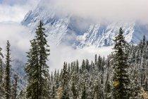 Heladas en los árboles en el Monte Siguniang - foto de stock