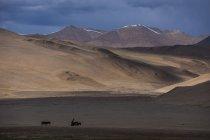 Nomad mit Eseln in der Nähe von Tso Moriri — Stockfoto