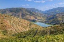 Viñedos y el río Duero - foto de stock