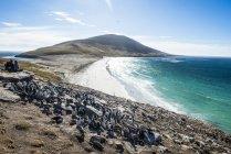 Південний рок Хоппер колонії пінгвінів — стокове фото