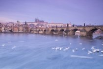 White swans on the Vltava River — Stock Photo