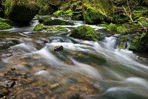 Лесной ручей, Schiessendumpel — стоковое фото