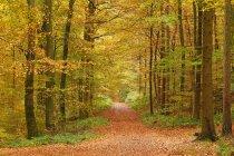 Foresta d'autunno, Germania — Foto stock