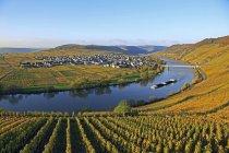 Vineyards near Trittenheim, Germany — Stock Photo
