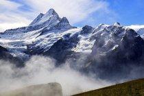 Schreckhorn, Grindelwald, Suiza - foto de stock