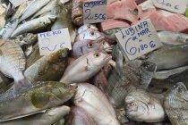 Frischer Fisch in Lebensmittelmarkt — Stockfoto