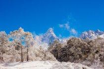 Гора Еверест зі снігом покриті лісом — стокове фото