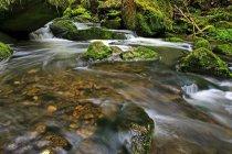 Ruisseau de la forêt, Schiessendumpel, Mullerthal — Photo de stock